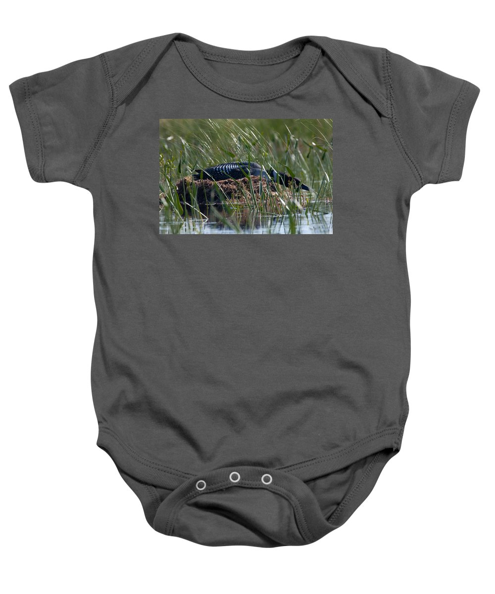 Loon Baby Onesie featuring the photograph Nesting Loon by Brent L Ander
