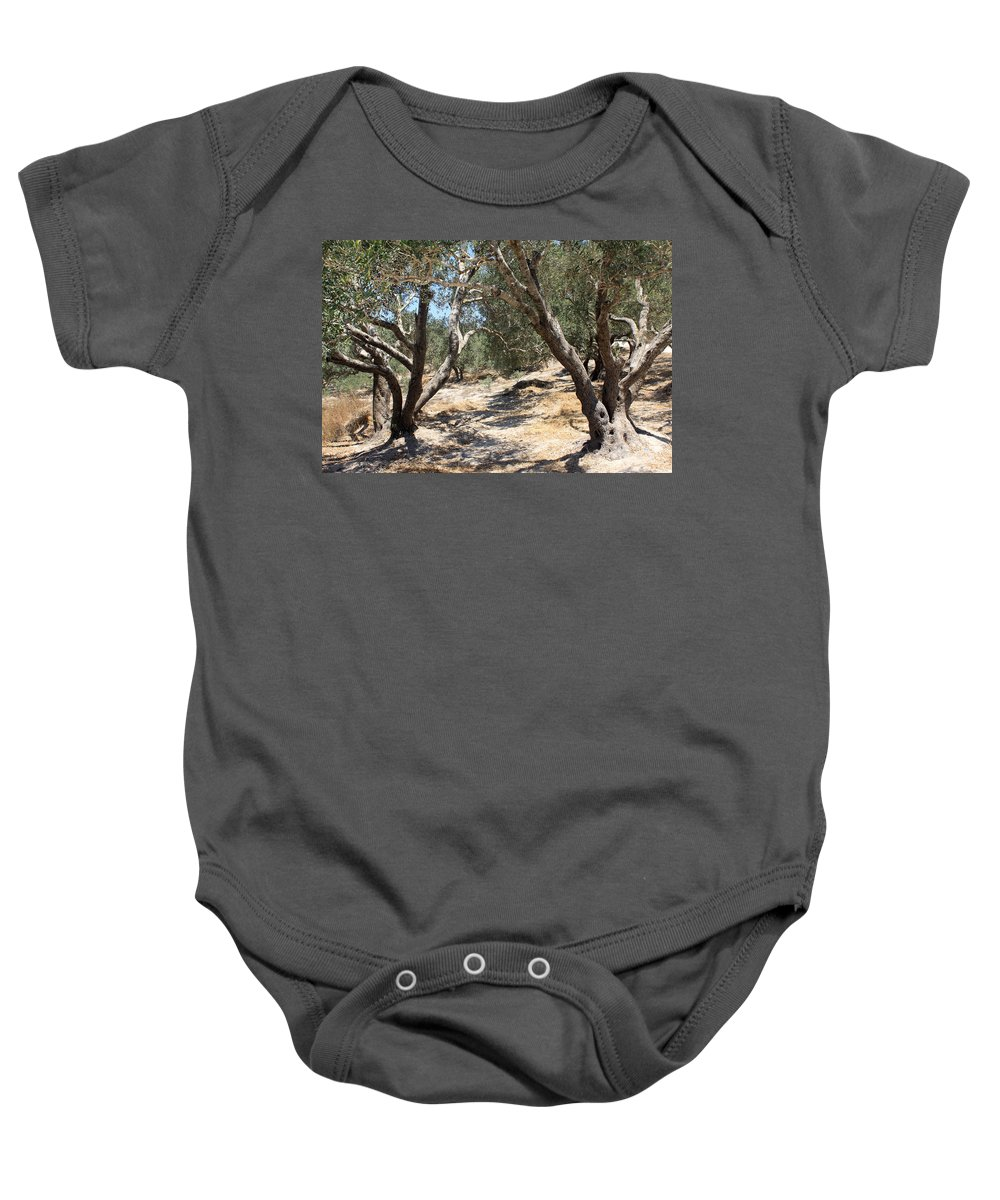 Olive Baby Onesie featuring the photograph Olive Trees At Sebastia by Munir Alawi