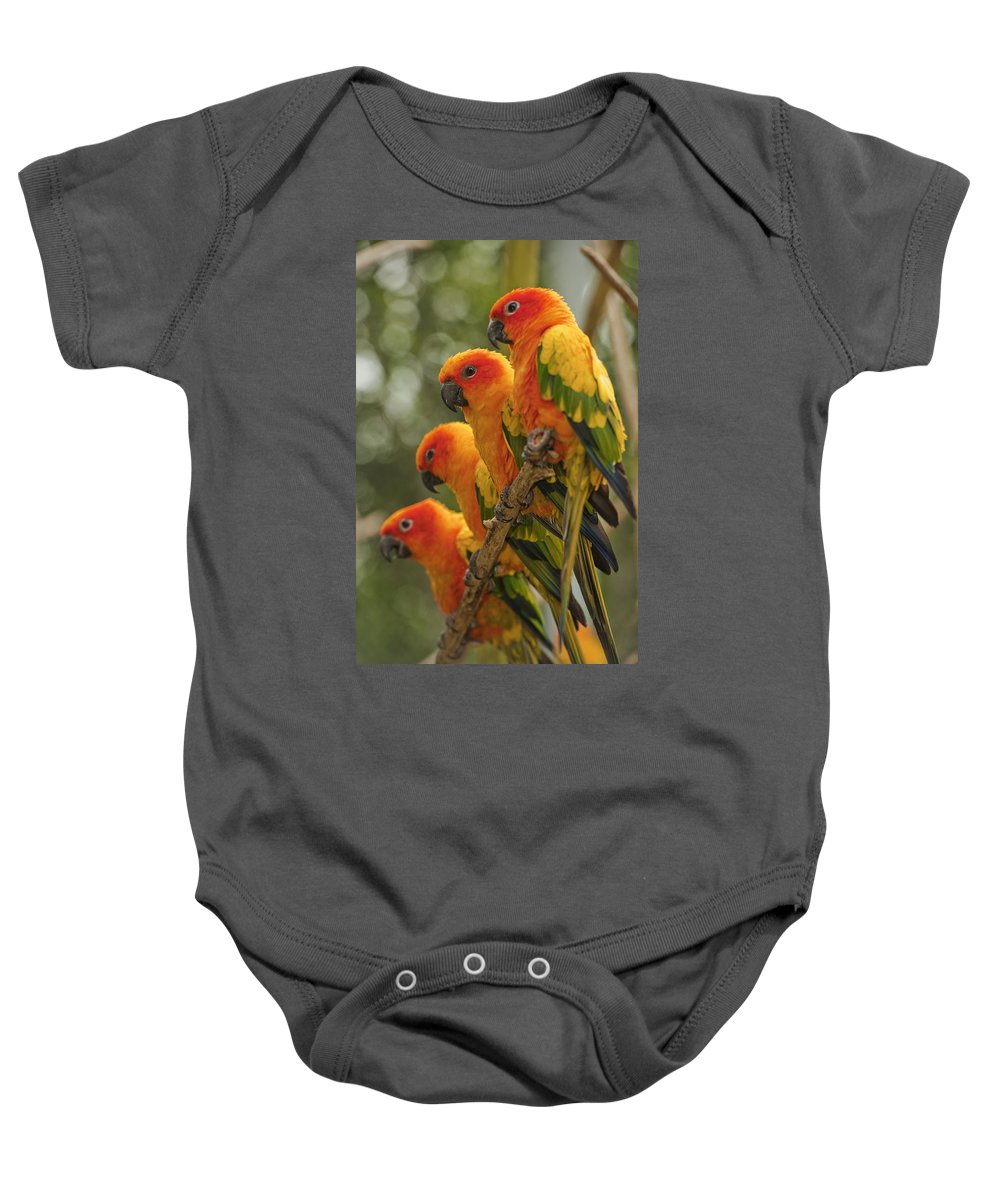 Attention Baby Onesie featuring the photograph Orange Parakeets Chiang Mai Thailand by Stuart Corlett
