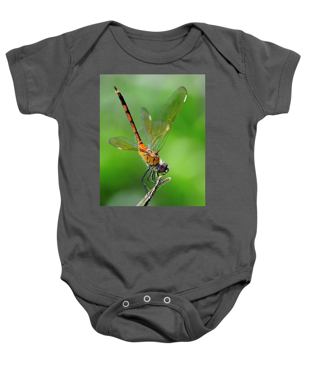 Pennant Baby Onesie featuring the photograph Pennant Dragonfly Obilisking by Bill Dodsworth