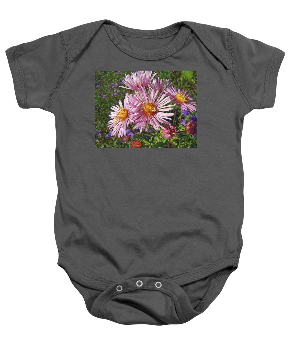 Aster Baby Onesie featuring the photograph Pink New York Aster- Symphyotrichum Novi-belgii by Mother Nature