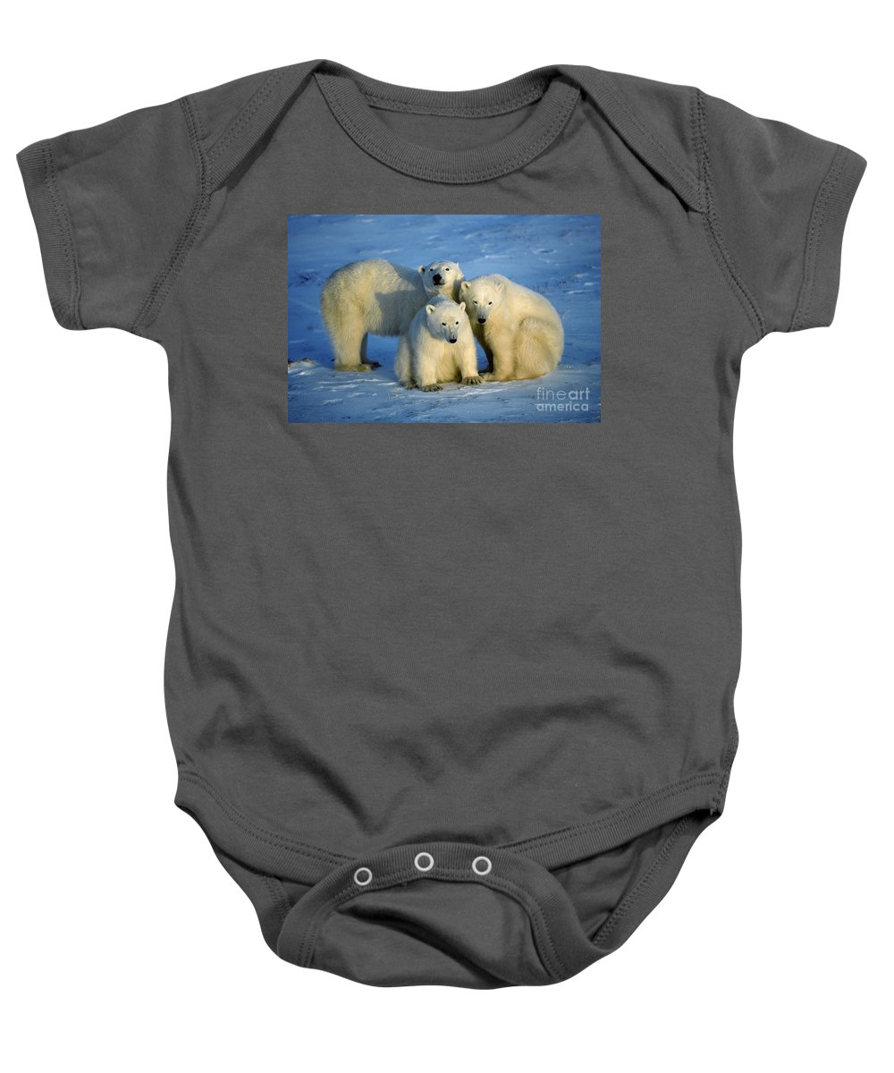 Animal Baby Onesie featuring the photograph Polar Bear With Cubs by Francois Gohier and Photo Researchers