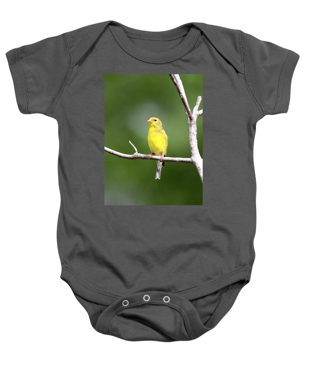 Goldfinch Baby Onesie featuring the photograph Pretty Little Lady by Travis Truelove