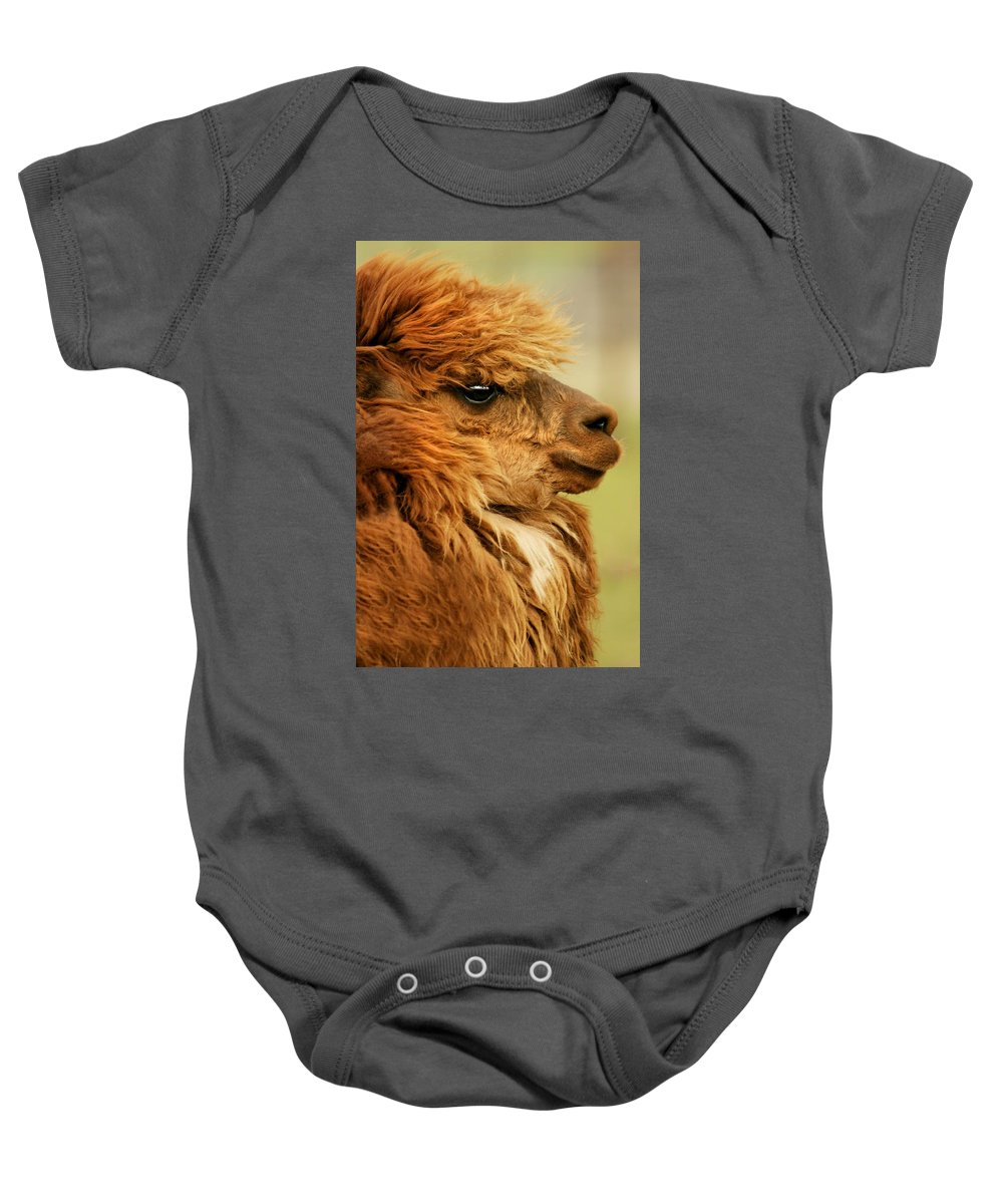 Animal Baby Onesie featuring the photograph Profile Of A Camelid by Con Tanasiuk