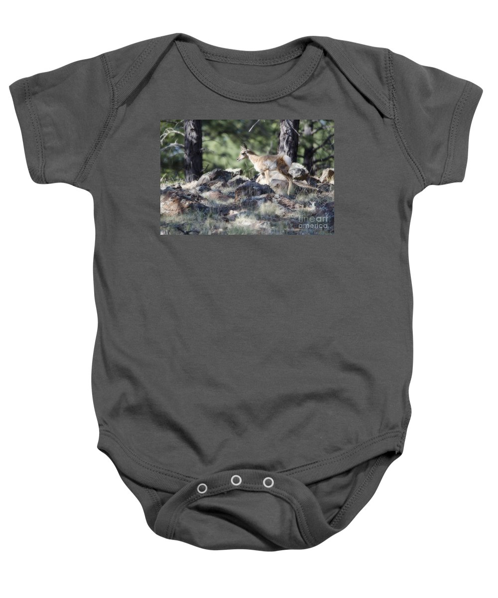 Fine Art Baby Onesie featuring the photograph Pronghorn Antelope Fawn by Donna Greene