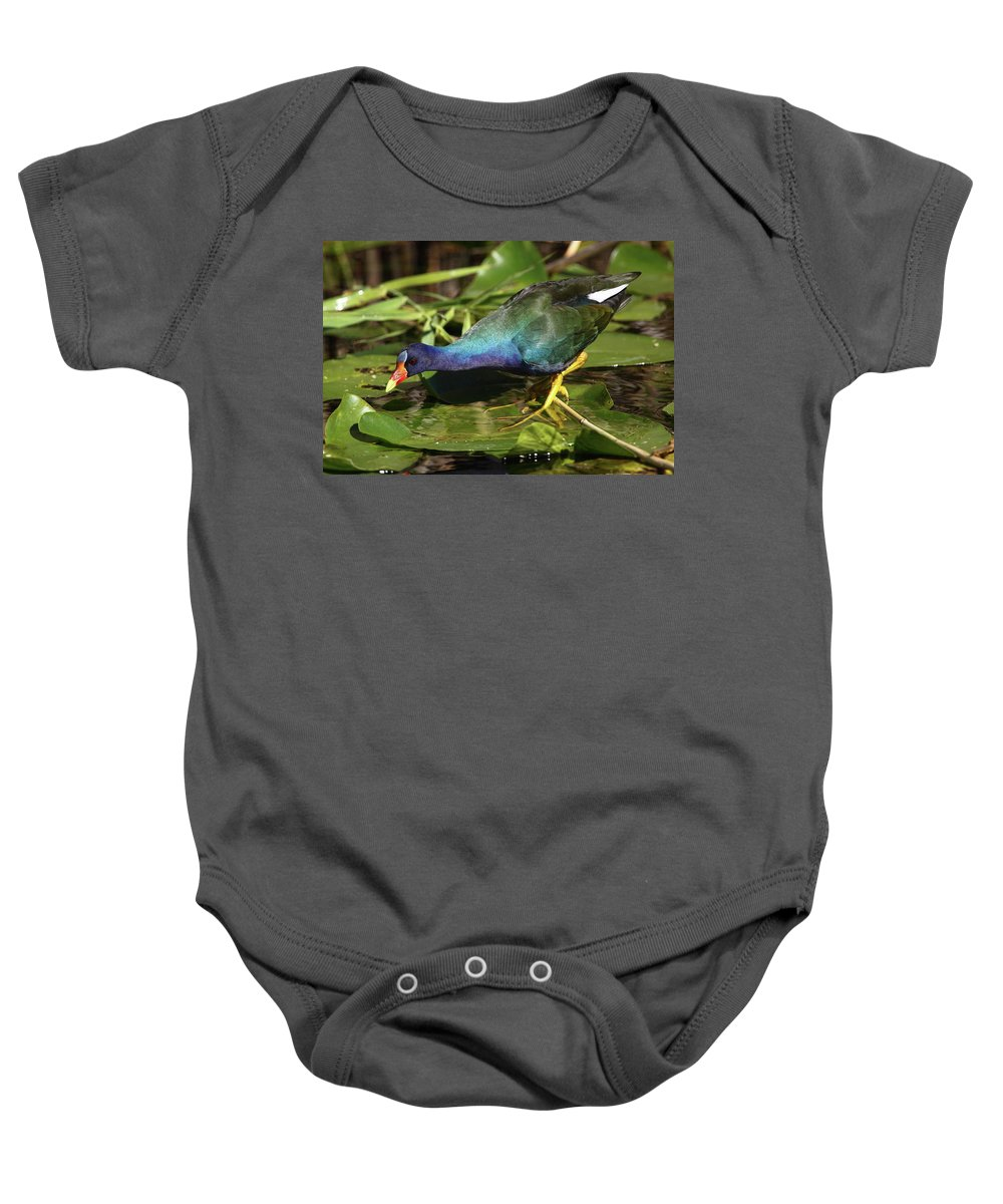 Baby Onesie featuring the photograph Purple Gallinule by Bruce J Robinson
