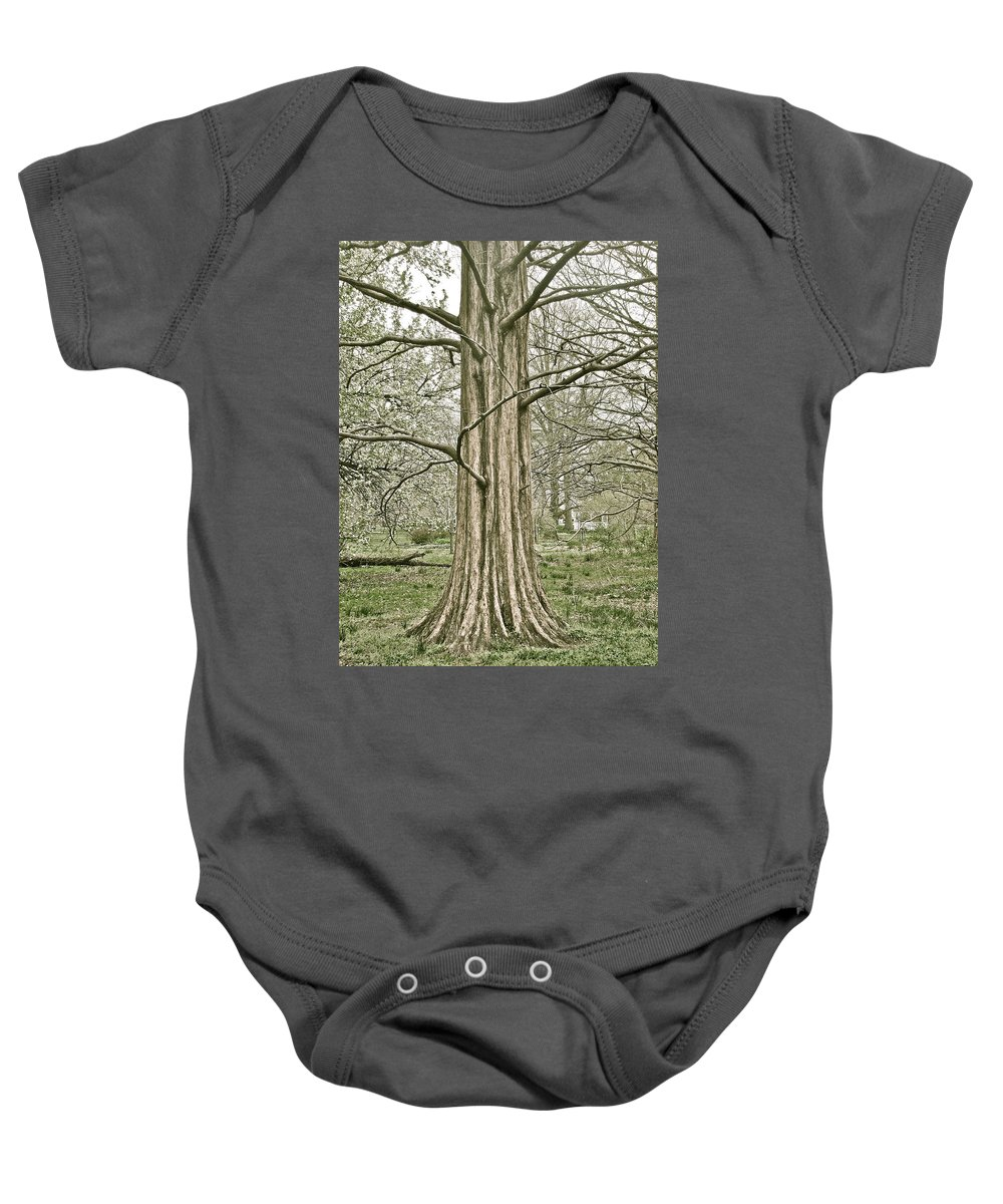 Tree Winter Leafless Baby Onesie featuring the photograph Quiet Tree by Alice Gipson