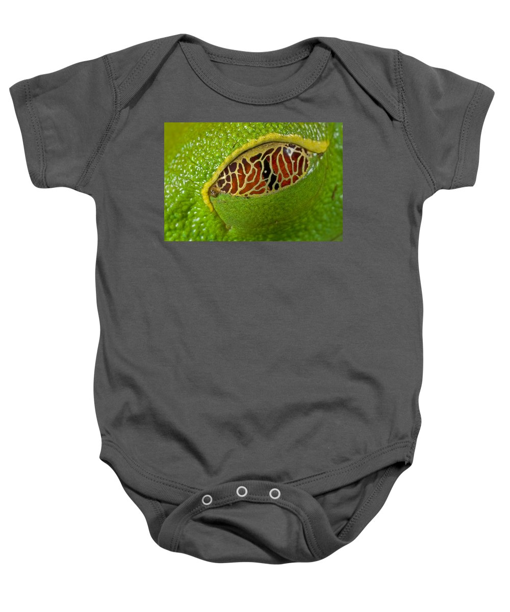 00298104 Baby Onesie featuring the photograph Red Eyed Tree Frog Eyelid Costa Rica by Piotr Naskrecki
