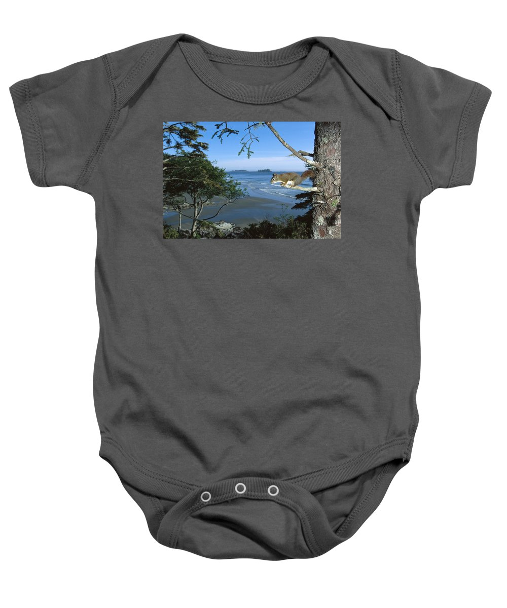00117733 Baby Onesie featuring the photograph Red Squirrel In Tree by Flip Nicklin