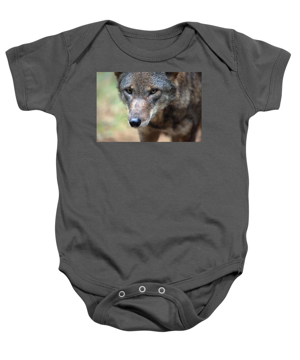 Wolf Baby Onesie featuring the photograph Red Wolf Closeup by Karol Livote