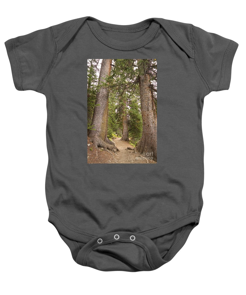 Colorado Baby Onesie featuring the photograph Rocky Mountain Forest Walk by James BO Insogna