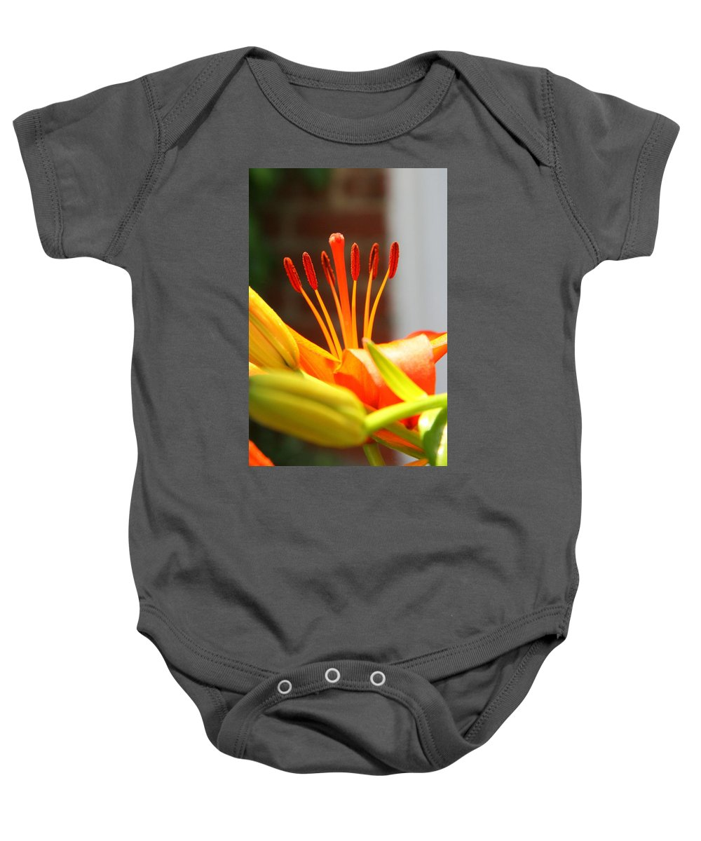 Stamen Baby Onesie featuring the photograph Round Up by Phil Cappiali Jr