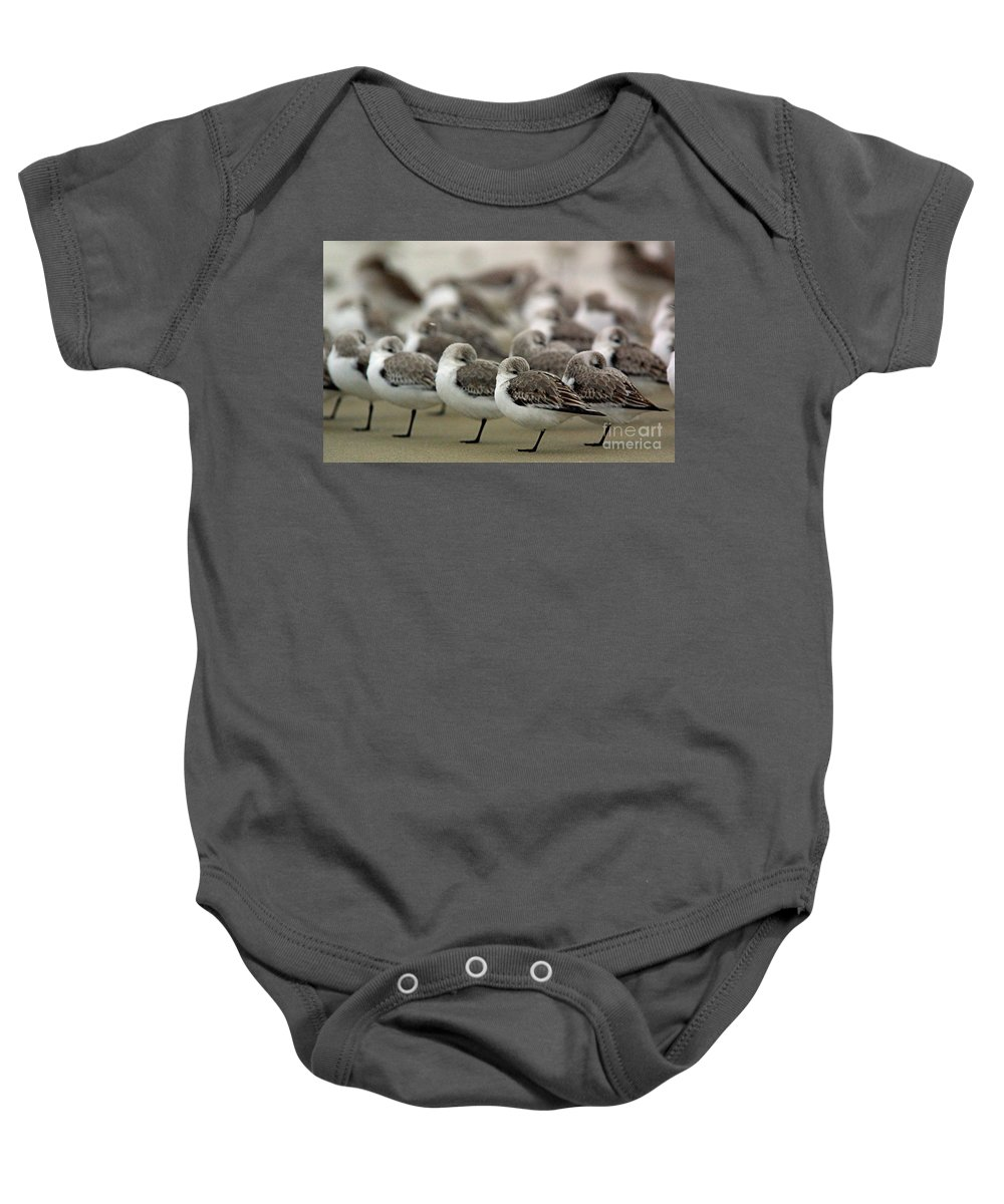 Wildlife Baby Onesie featuring the photograph Sanderlings Try To Keep Warm At Corporation Beach In Dennis On C by Matt Suess