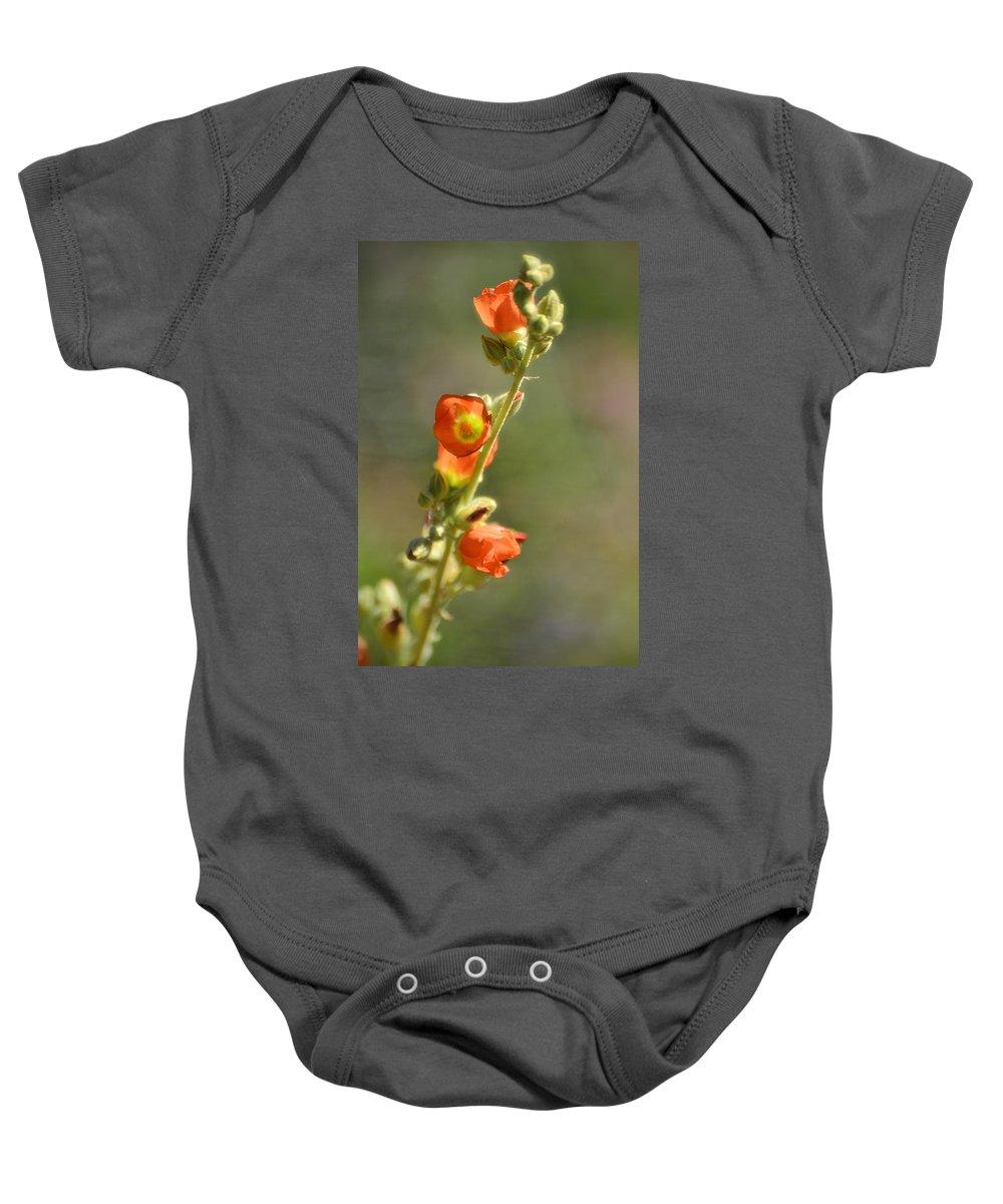 Scarlet Globe-mallow Baby Onesie featuring the photograph Scarlet Globe-mallow by Saija Lehtonen