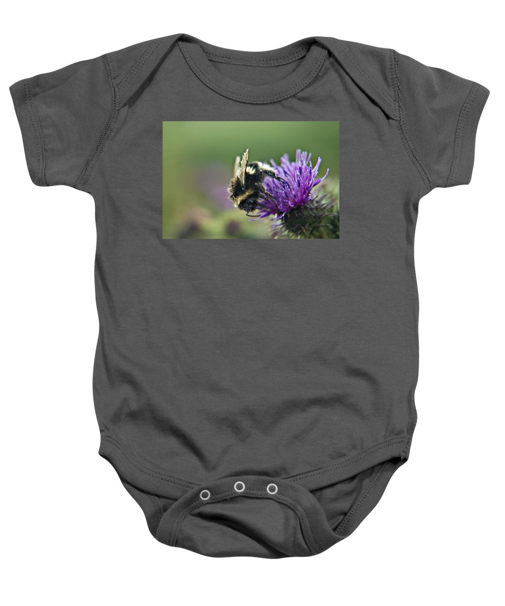 Bee Baby Onesie featuring the photograph Scrufy Old Bee by Vicki Field