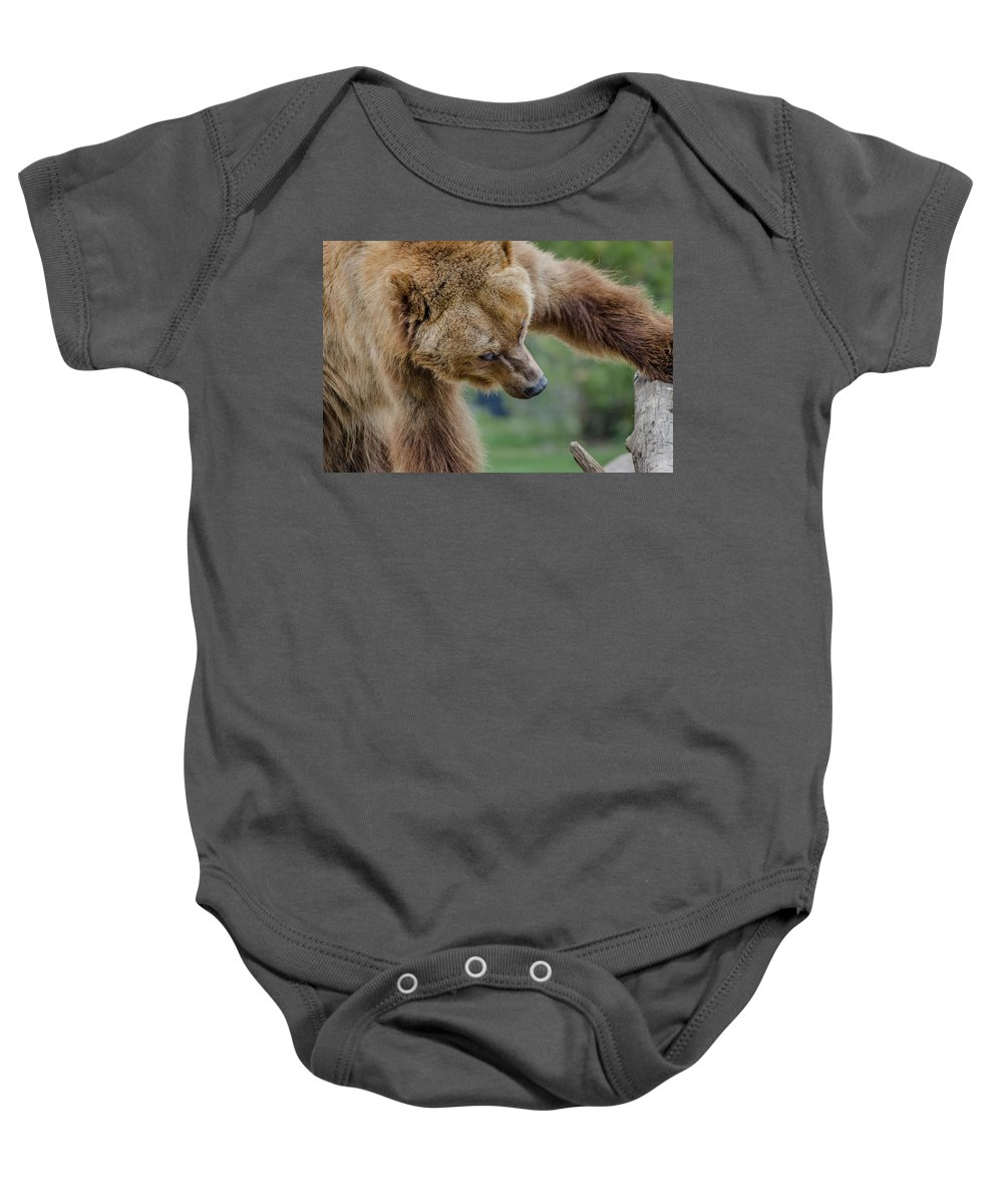 Grizzly Bear Baby Onesie featuring the photograph Searching by Greg Nyquist