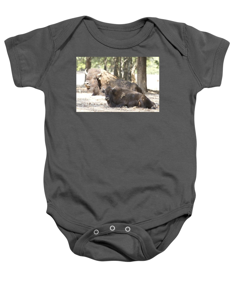 Buffalo Baby Onesie featuring the photograph Shaded Resting Place by Douglas Barnard