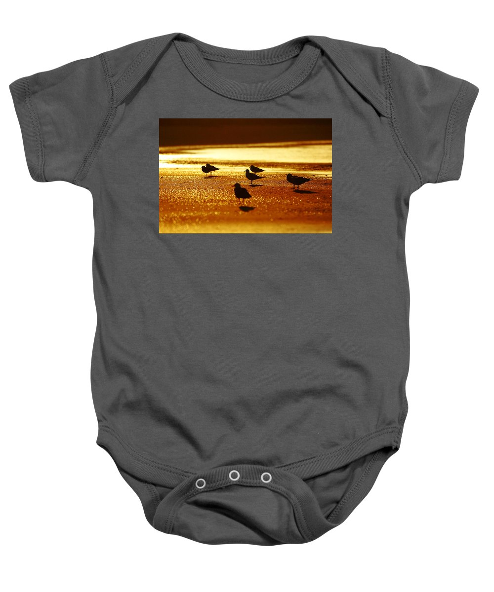 Silver Gull Baby Onesie featuring the photograph Silver Gulls On Golden Beach by Andrew McInnes