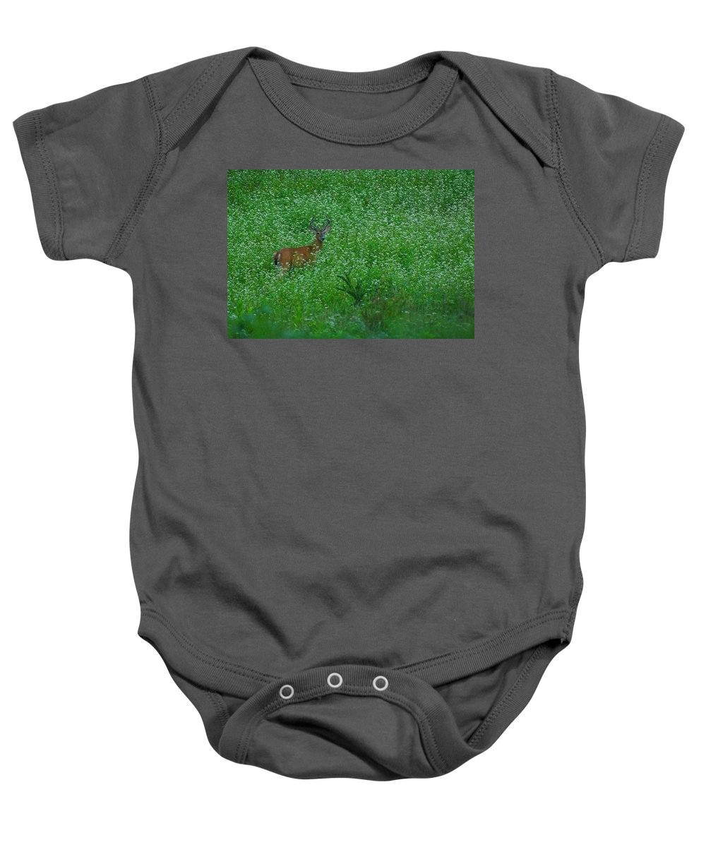 Pennsylvania Baby Onesie featuring the photograph Six Point Deer In Wildflowers by Rich Walter
