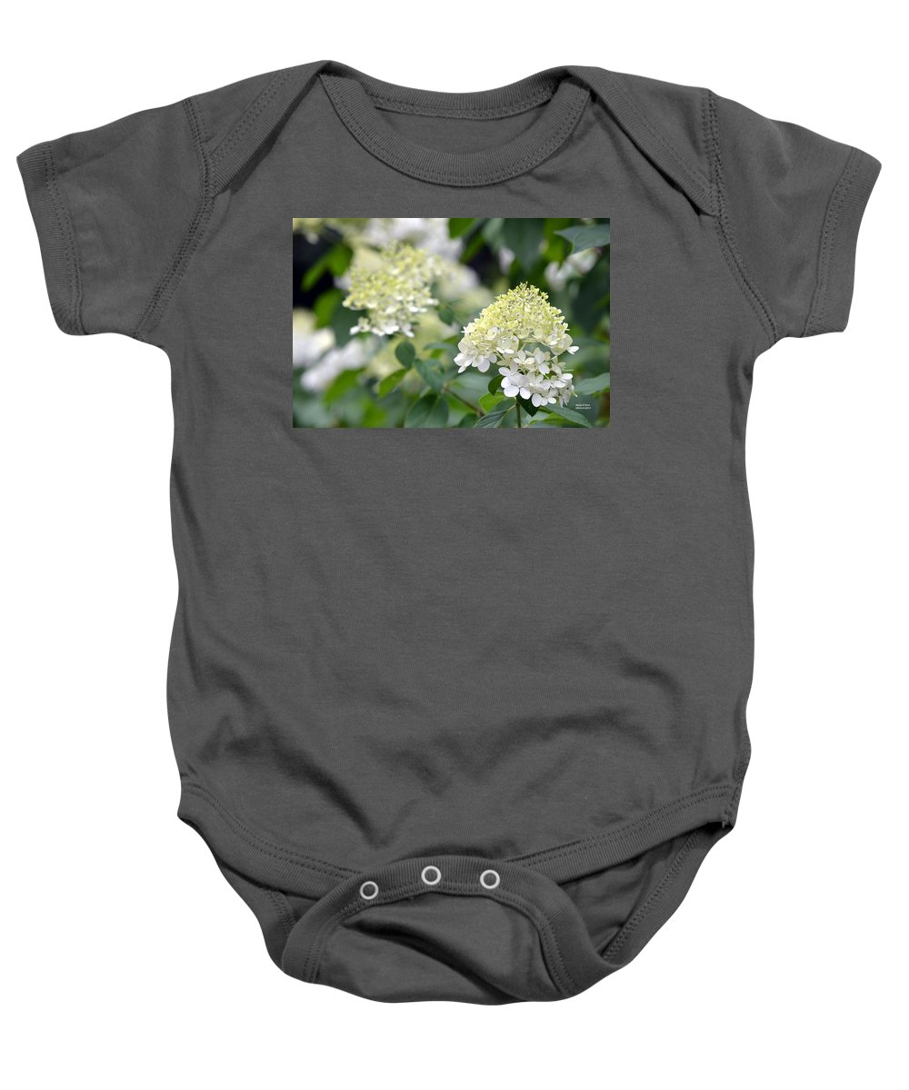 Snowflake Baby Onesie featuring the photograph Snowflake Hydrangea 2 by Maria Urso