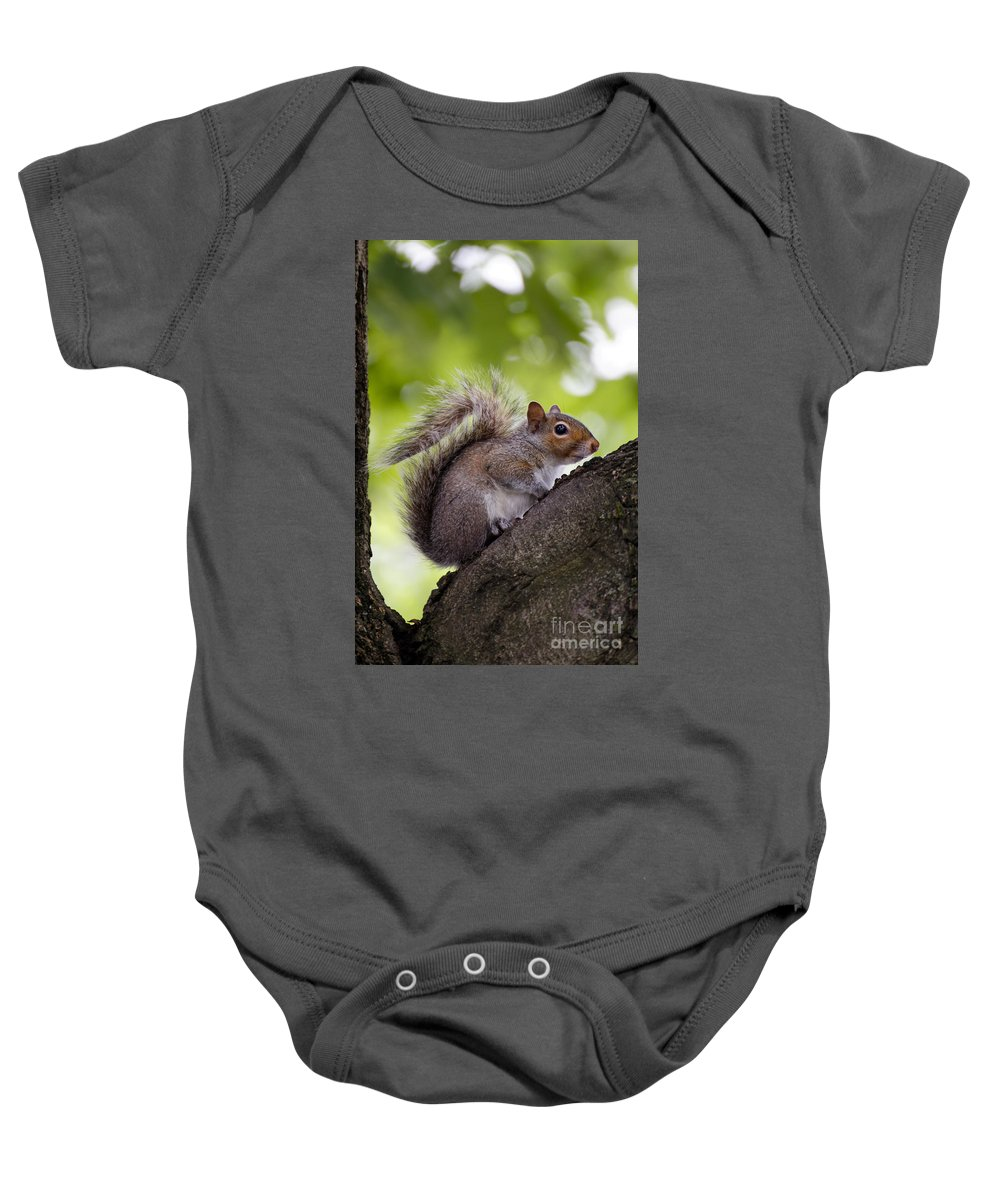 Alert Baby Onesie featuring the photograph Squirrel Before Green Leaves by Jannis Werner