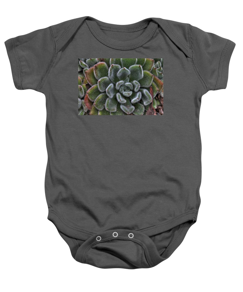 Succulent Baby Onesie featuring the photograph Succulent by Jane Linders