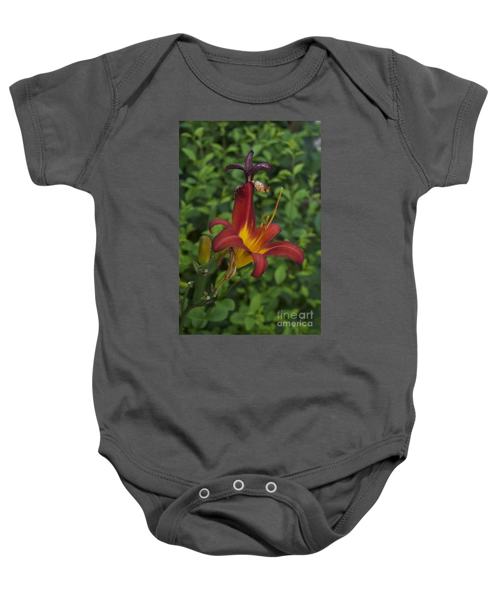 Tiger Lilly Photographs Baby Onesie featuring the photograph Tiger Lilly by Catherine Conroy