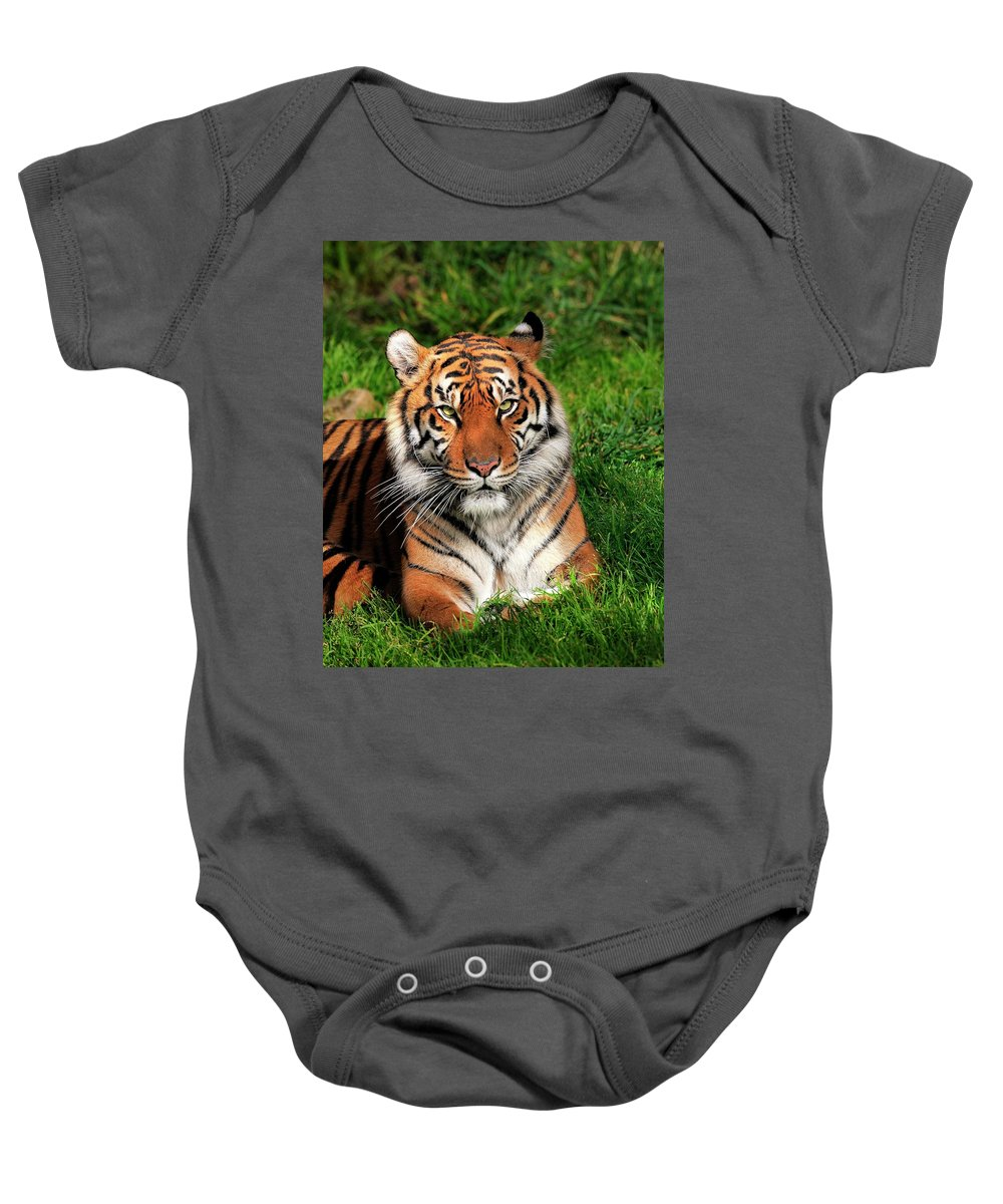 Sumatran Baby Onesie featuring the photograph Tiger Sitting In The Grass by Bill Dodsworth
