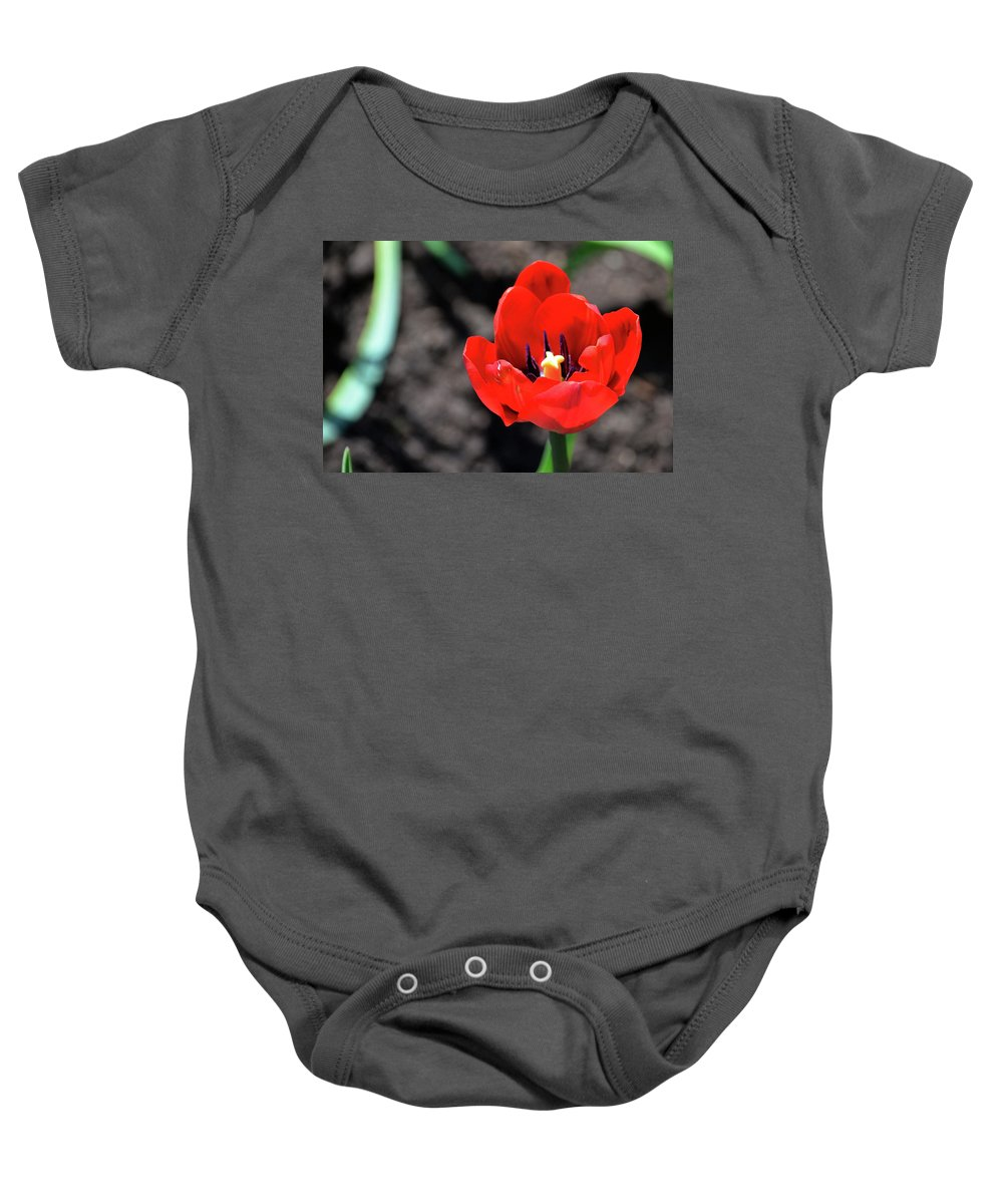 Tulips Baby Onesie featuring the photograph Tulips Blooming by Pravine Chester