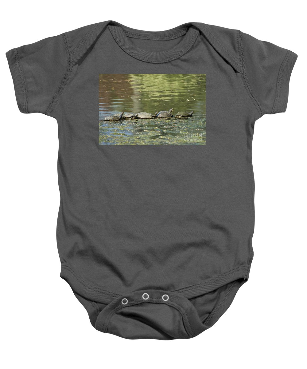 Turtles Baby Onesie featuring the photograph Turtle Traffic Jam by Tim Mulina