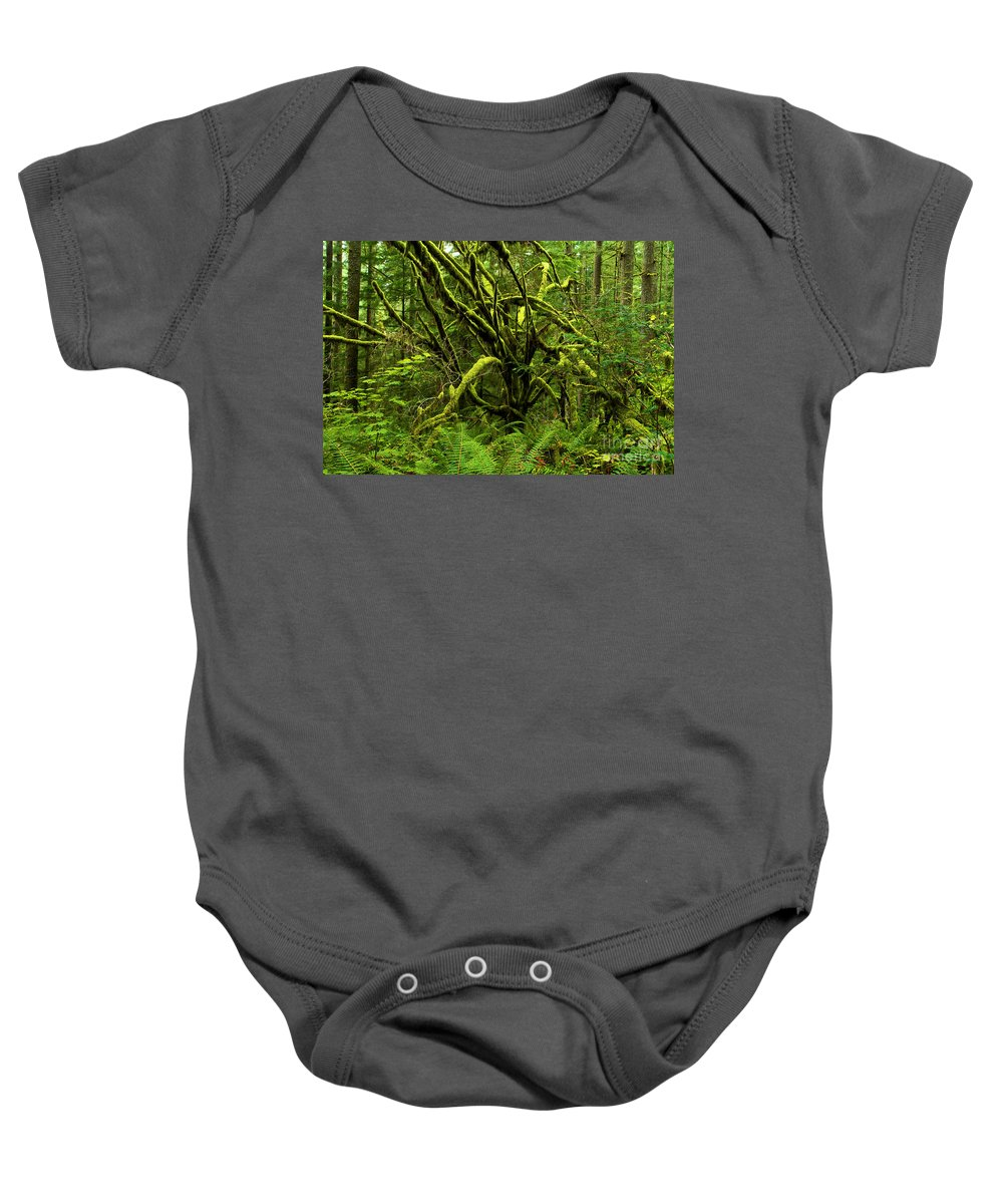 Silver Falls Baby Onesie featuring the photograph Twisted Rain Forest by Adam Jewell