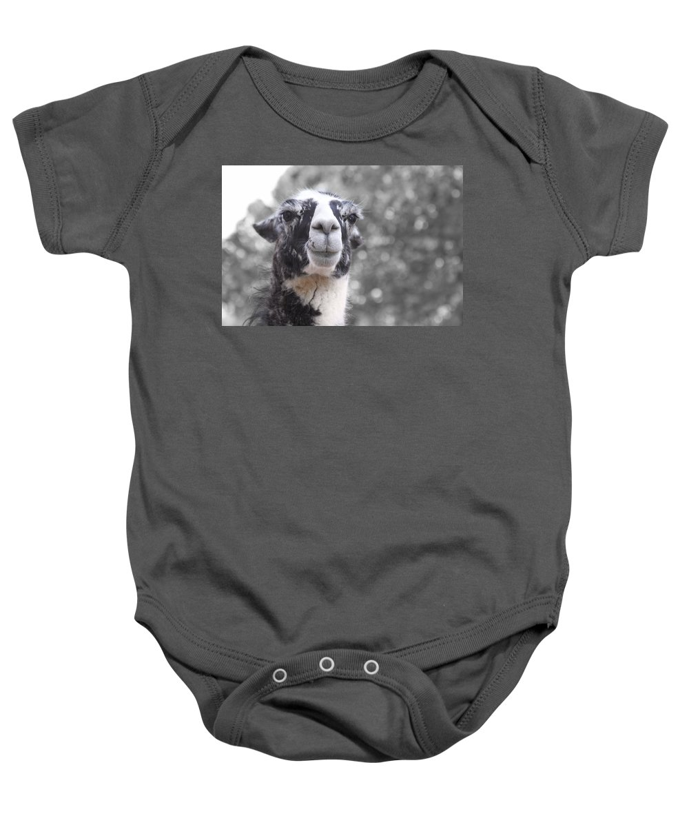Lama Baby Onesie featuring the photograph Two-toned by Douglas Barnard