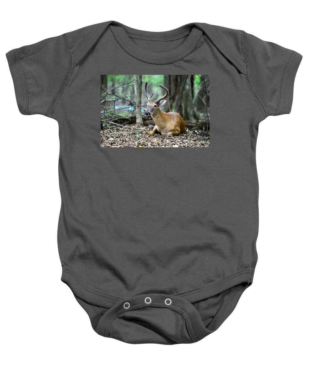 Velvet Buck At Rest Baby Onesie featuring the photograph Velvet Buck At Rest by Paul Ward