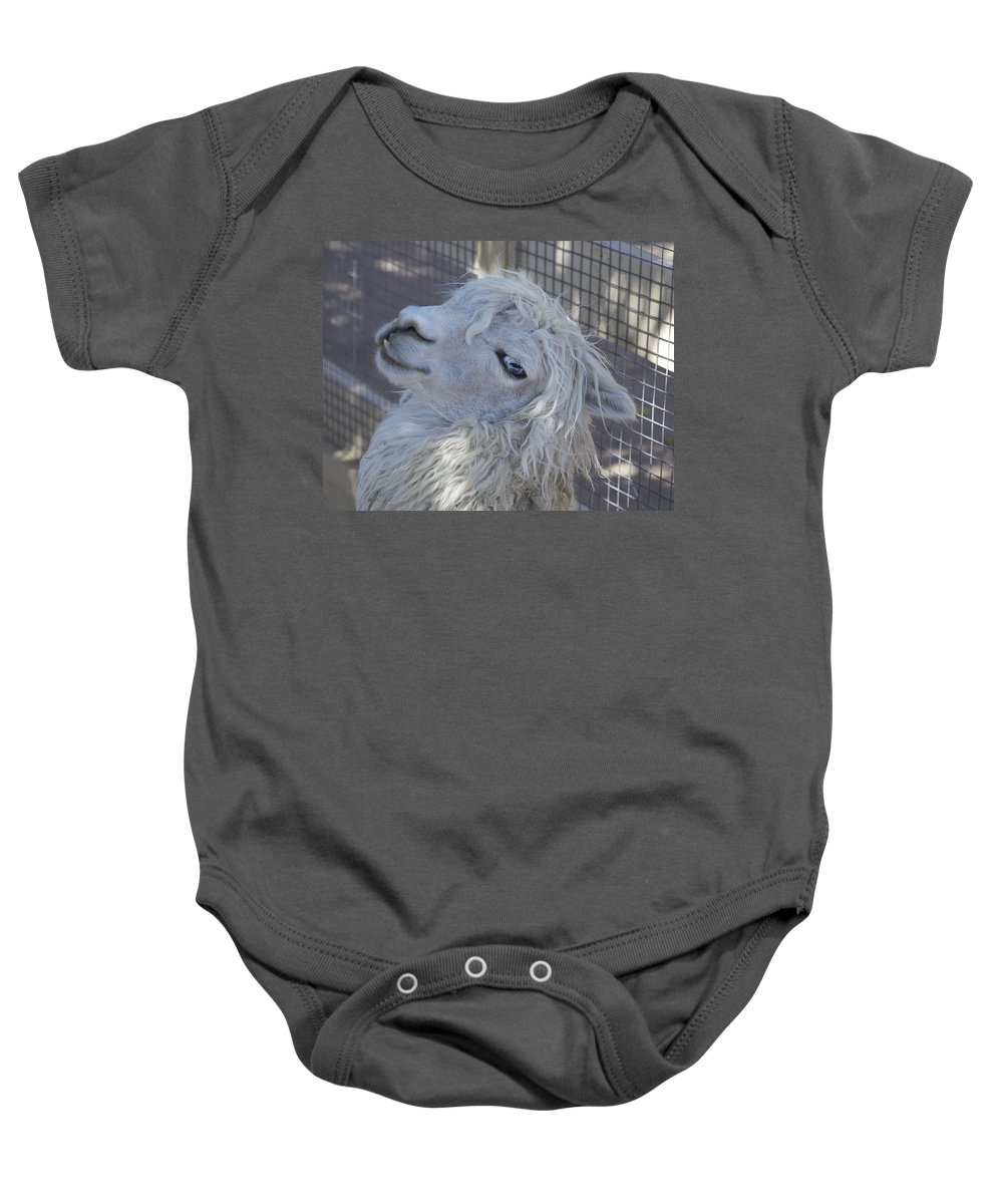 Animals Baby Onesie featuring the photograph White Llama by Portraits By NC