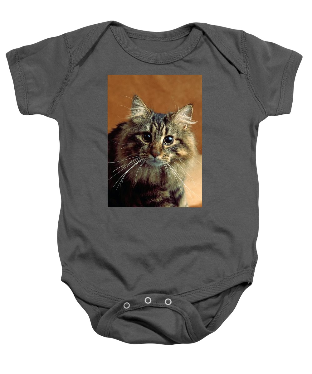 Maine Coon Cat Baby Onesie featuring the photograph Wide-eyed Maine Coon Cat by Larry Allan