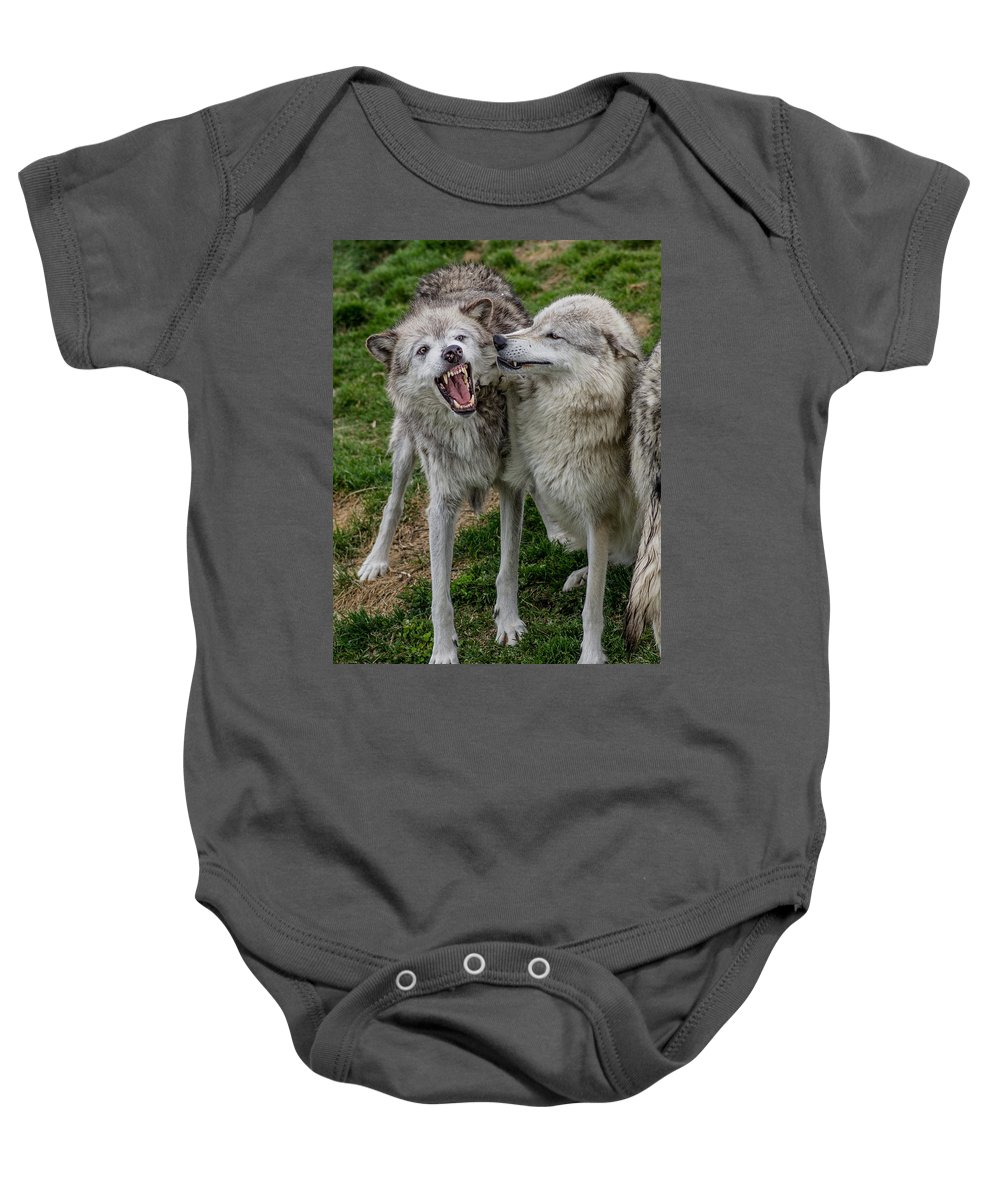 Fangs Baby Onesie featuring the photograph Wolf Confab by Greg Nyquist