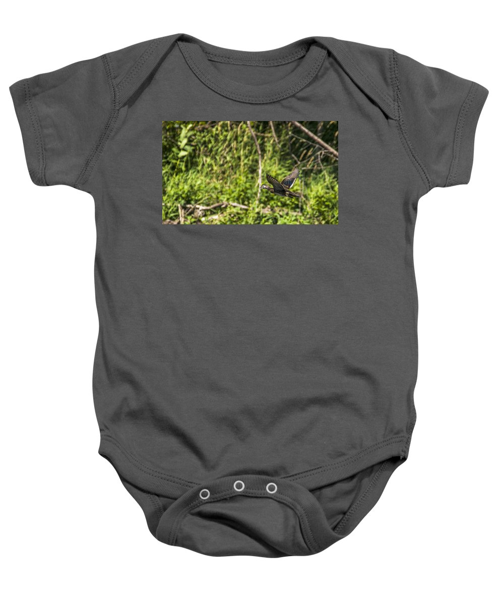 Wildlife Baby Onesie featuring the photograph Wood Duck In Flight by Edward Peterson