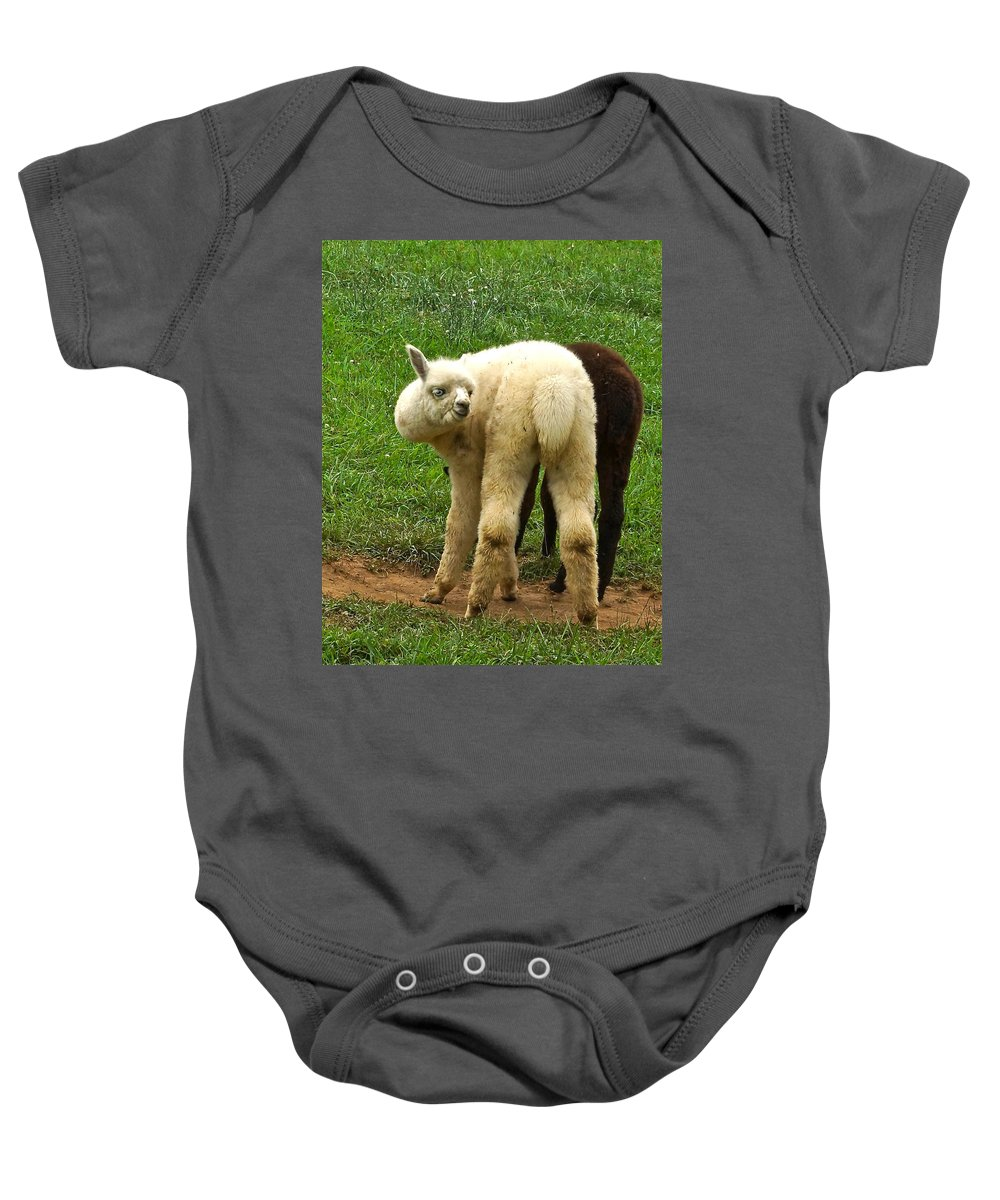 White Alpaca Staring Baby Onesie featuring the photograph You Can't Sneak Up On Alpacas by Byron Varvarigos