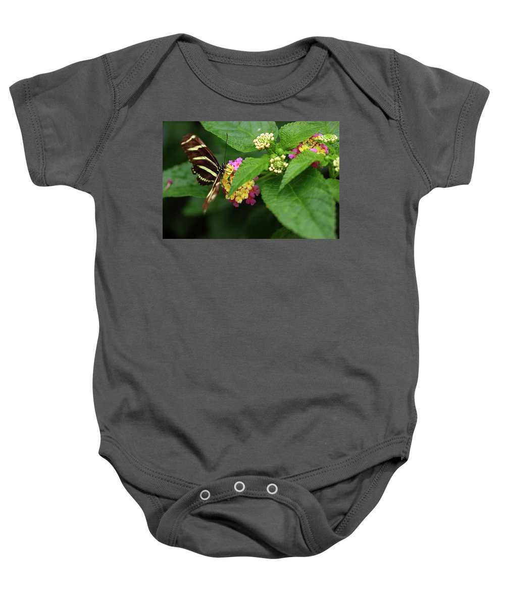 Butterfly Baby Onesie featuring the photograph Zebra Longwing by Rick Berk