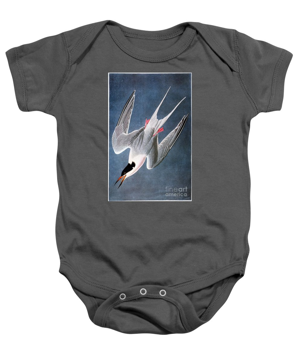 1838 Baby Onesie featuring the photograph Audubon: Tern by Granger