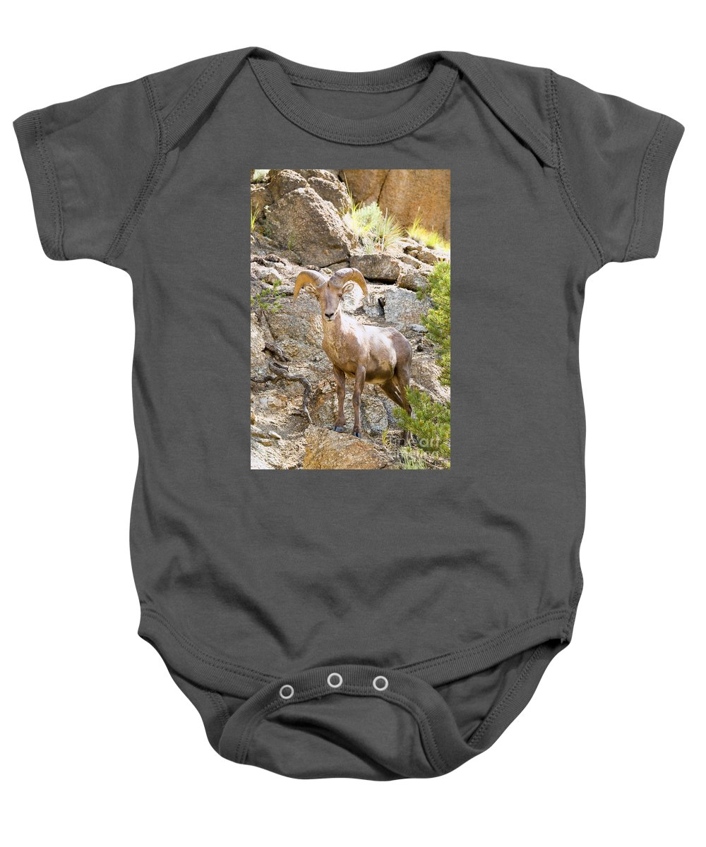 Bighorn Sheep Baby Onesie featuring the photograph Bighorn Sheep In The San Isabel National Forest by Steve Krull