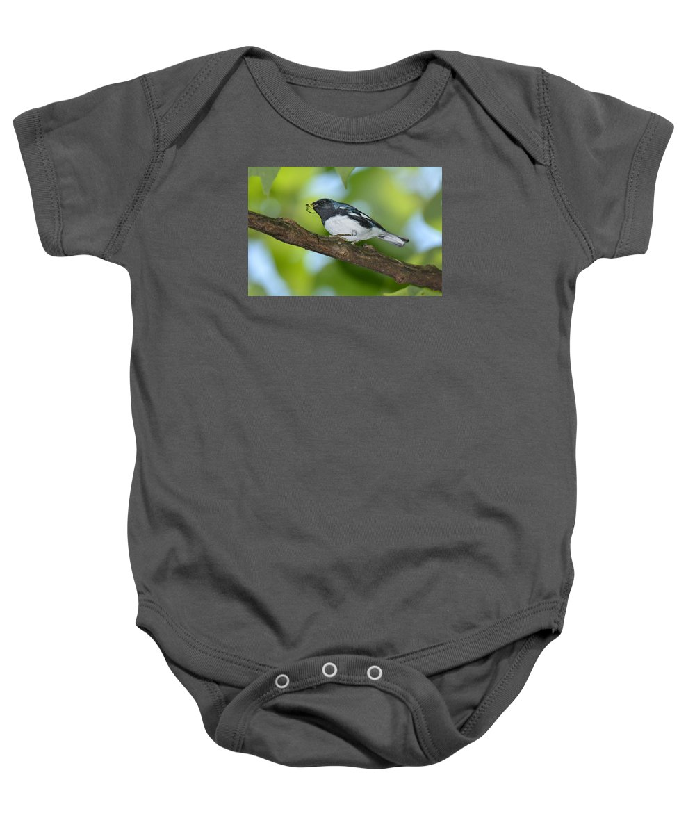Bird Baby Onesie featuring the photograph Black-throated Blue Warbler by Alan Lenk