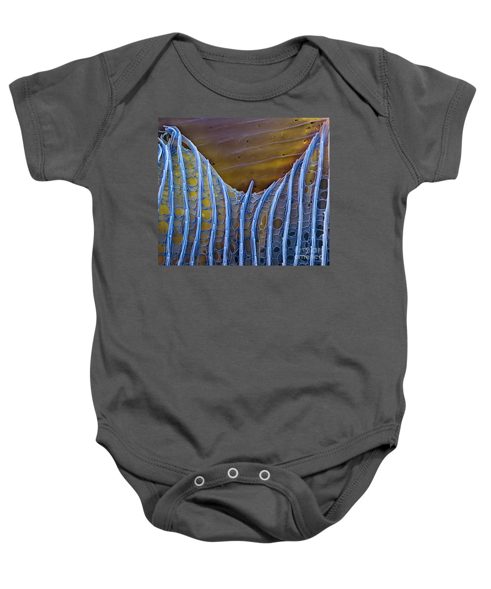 Science Baby Onesie featuring the photograph Butterfly Wing Scale Sem by Eye of Science