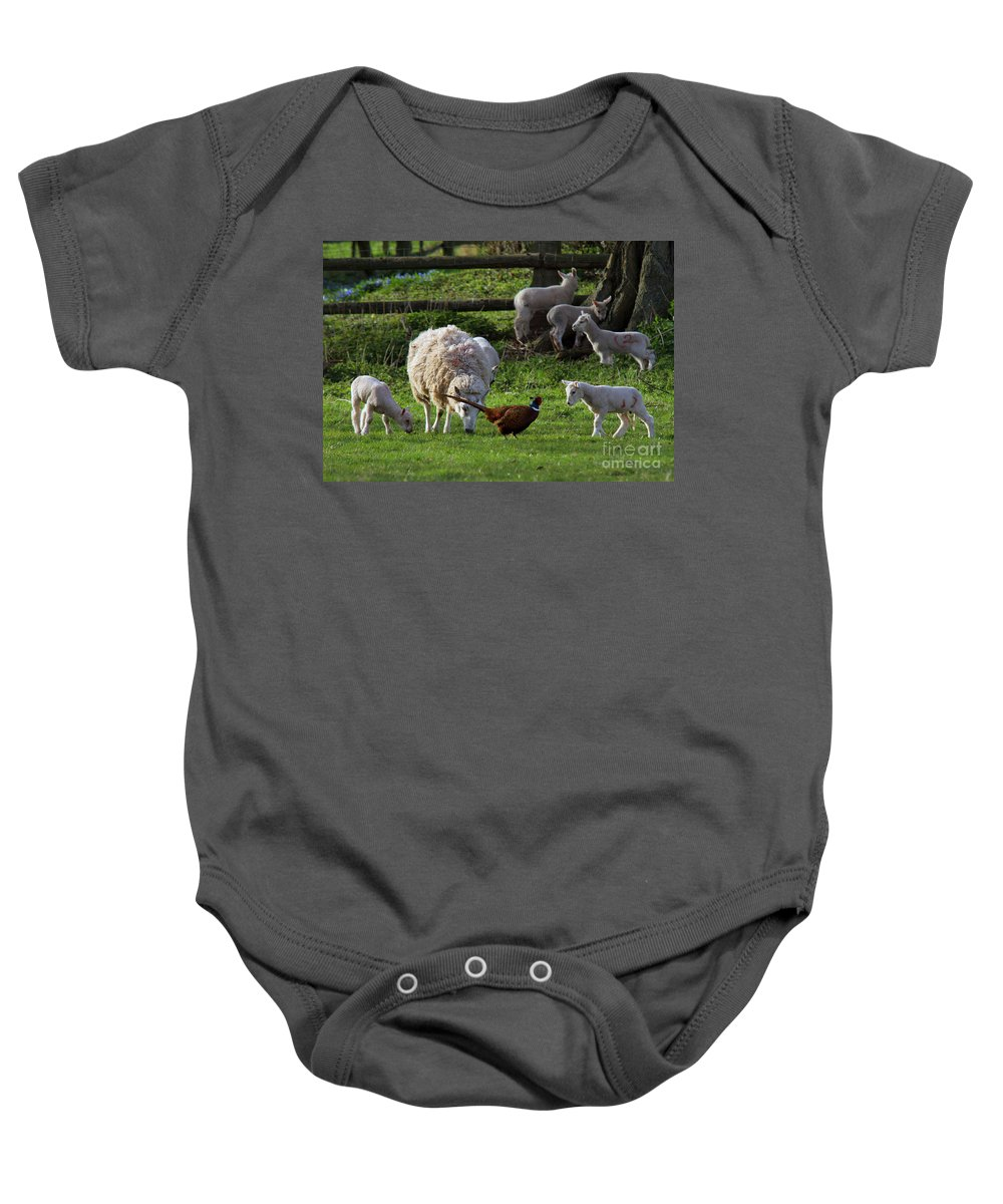 Pheasant Baby Onesie featuring the photograph Close Encounter Of The Third Kind by Angel Ciesniarska