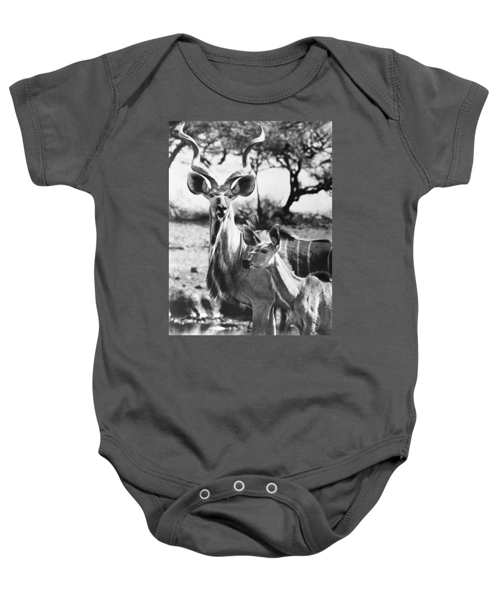 20th Century Baby Onesie featuring the photograph East Africa: Kudu by Granger