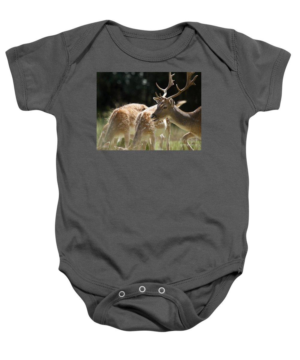 Fallow Deer Baby Onesie featuring the photograph Fallow Deer by Angel Ciesniarska