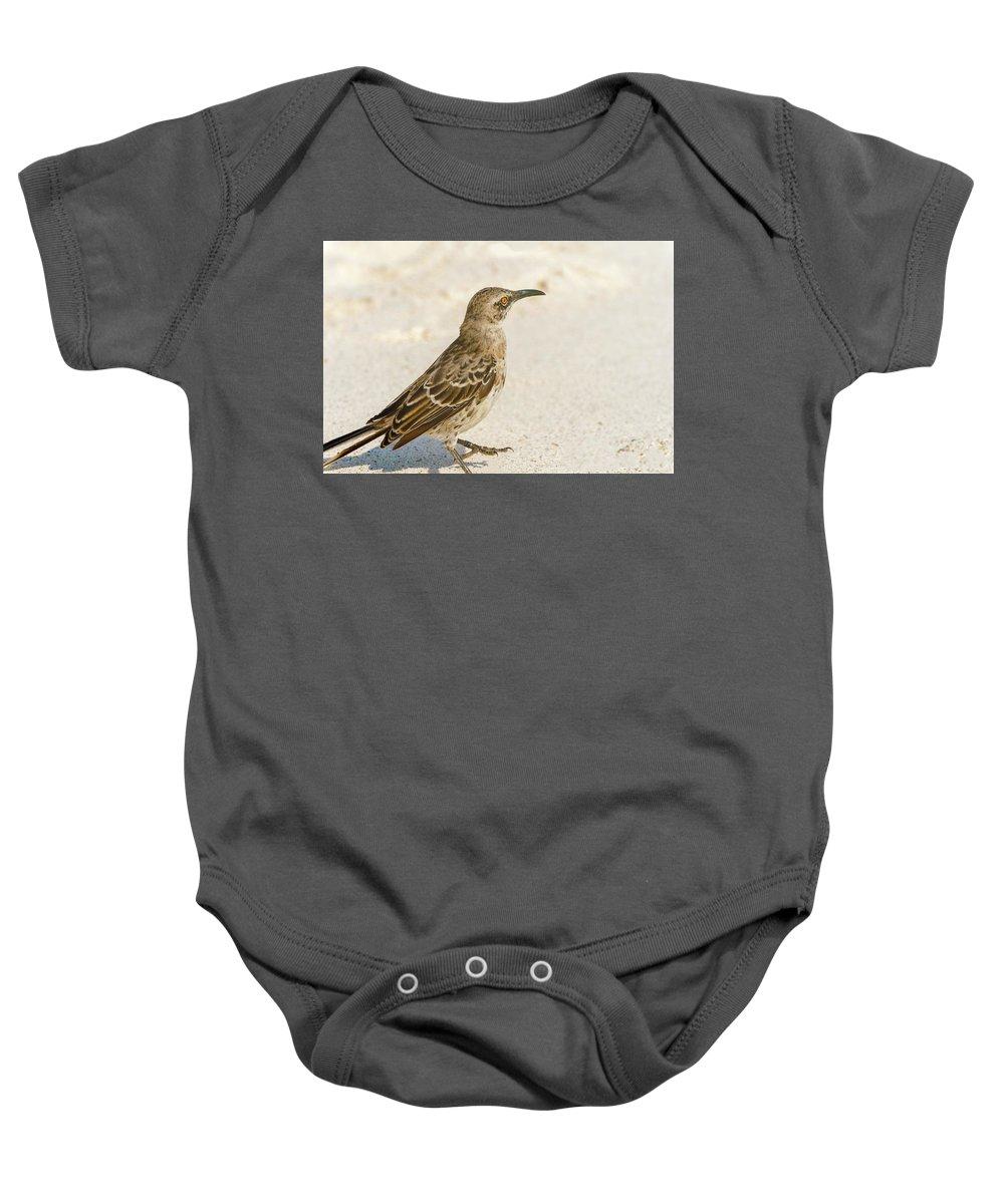 Espanola Baby Onesie featuring the photograph Galapagos Hood Mockingbird by Marek Poplawski