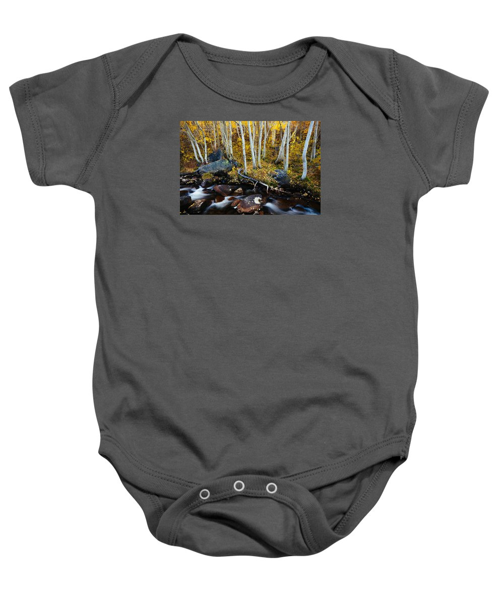 Aspen Baby Onesie featuring the photograph Golden Respite by Justin Lowery