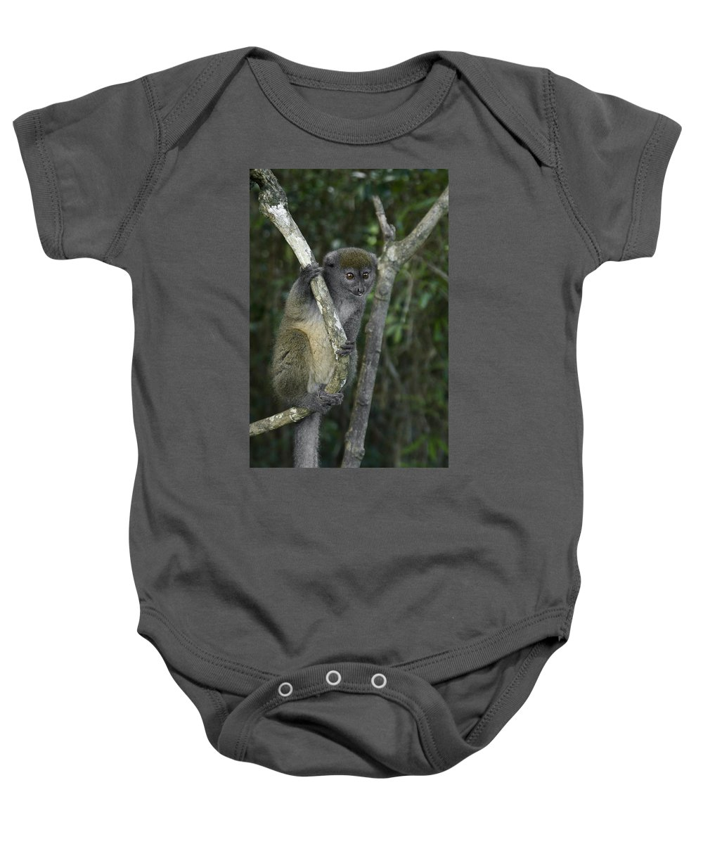 Madagascar Baby Onesie featuring the photograph Gray Bamboo Lemur by Michele Burgess