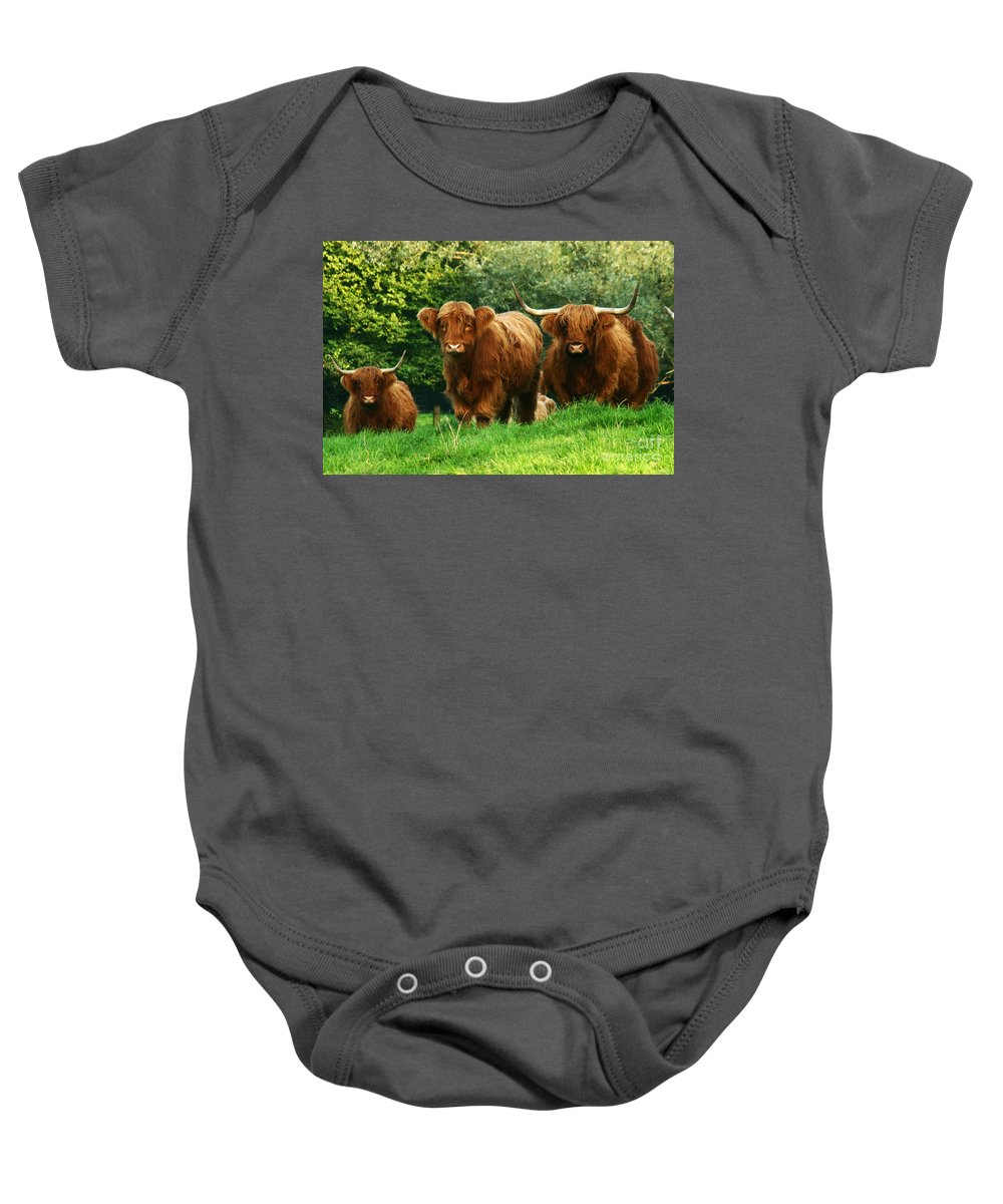 Cow Baby Onesie featuring the photograph Highland Cattle by Angel Ciesniarska